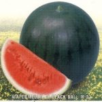 WatermelonF1BlackBall