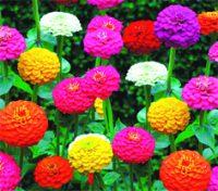 Flowers A - D