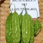 BITTER-GOURD-F1-GREEN-777-1-150x150