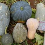 CHINESE GOURD MIX