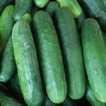 Poinsett_76_Cucumber