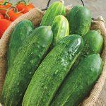 Cucumis - Straight Eight Cucumber