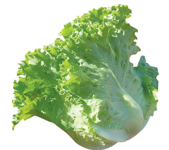 Lettuce & Endive